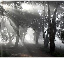 ~ Sunshine ~ Photographic Print
