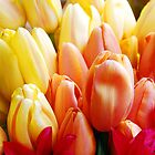 A Bunch of Tulips by Jennifer Hulbert-Hortman