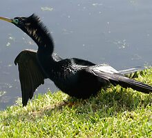 Anhinga beauty by ♥⊱ B. Randi Bailey