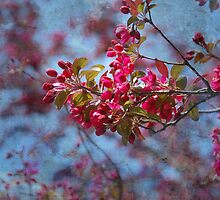 Blossoms  by Elaine  Manley