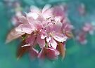 Cherry Blossoms by Elaine  Manley