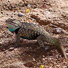 Wild Lizard by Tim Wright