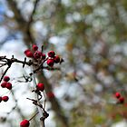 Autumn's Berries by White Owl