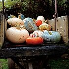 Happy bright  Pumpkins by White Owl