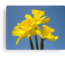 Blue Sky Floral art print Yellow Daffodil Flowers Canvas Print
