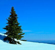 Lone Alpine Tree by Justin Atkins