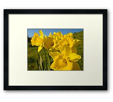 Golden Yellow Daffodil Flower Meadow art Baslee Troutman Framed Print