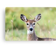 Portrait of a Whitetail Deer Metal Print