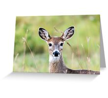 Portrait of a Whitetail Deer Greeting Card