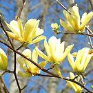 Tree Blossom Flowers Photography Calendars by BasleeArtPrints