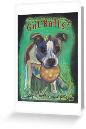 Boston Terrier - Spay/Neuter by Ann Marie Hoff