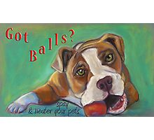 Bulldog - Spay/Neuter Photographic Print