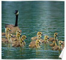 Spring Goslings Poster