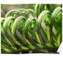 Curly Paradise Of Nature Poster