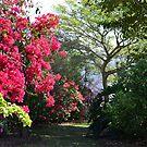 Garden by dez7