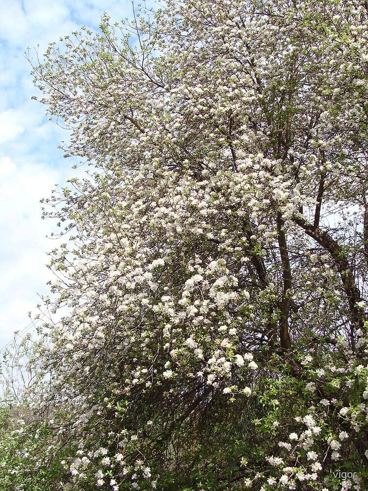 In Full Bloom by vigor