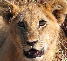 Lion Cub Portrait, Maasai Mara, Kenya  by Carole-Anne