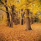 Autumn's leaving us so fast..... by White Owl