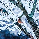 Female Cardinal In Snowy Tree by Mary Carol Story