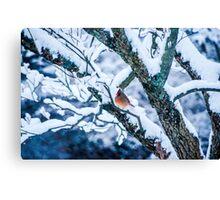 Female Cardinal In Snowy Tree Canvas Print