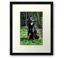Bruno Portrait Framed Print