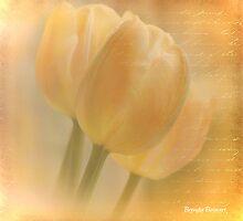 You Are My Light by Brenda Boisvert