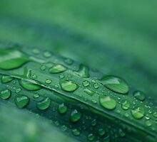 Water Drops by JoeyKelava