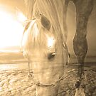 Beauty in Sepia by Doty