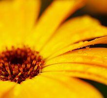 The Yellow Flower II by JoeyKelava