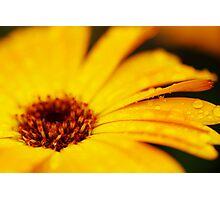 The Yellow Flower II Photographic Print