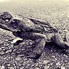 Cane Toad, Dead by mjds