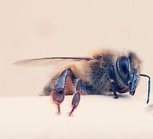 Bee my Friend by JoeyKelava