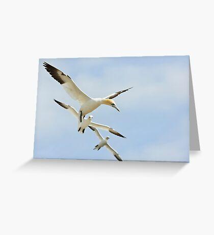 Gannet Echelon, Saltee Island, County Wexford, Ireland Greeting Card