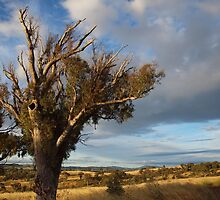 Late Afternoon, west of Canberra - Australia. by shortshooter-Al