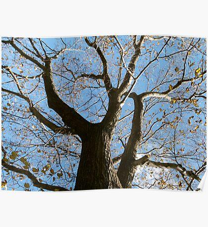 Autumn at Royal Park Poster