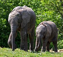 Me and my Big Bro going for a Stroll. by Mark Hughes
