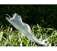 Finding Feathers Photographic Print