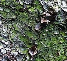Brisbane Floods 2011- Mud - New Life Takes Hold by Neil Ross