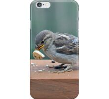 Fledgling house sparrow learning to eat on her own iPhone Case/Skin