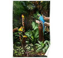Birds at Jurong Bird Park Singapore Poster