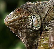 Lizard at Singapore Zoo by Steve Bass