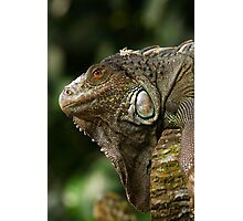 Lizard at Singapore Zoo Photographic Print