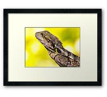 Lizard taken in my backyard Brisbane Framed Print