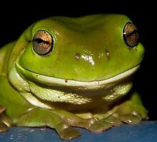 Green Tree Frog by Steve Bass