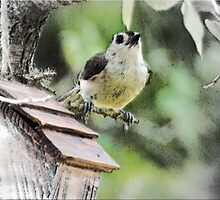 Tufted Titmouse by Caren