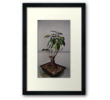 Bonsai I Framed Print