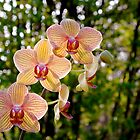 Orchid by filmdalight