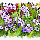 Purple rock cress - watercolour by PhotosByHealy