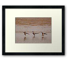 Geese Landing Framed Print