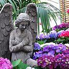An angel among the Hydrangeas by Marjorie Wallace